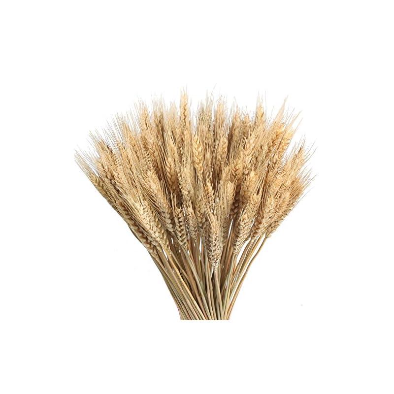 silk flower arrangements gtidea large golden dried natural wheat sheave bundle premium fall arrangements full wholesale diy home kitchen table wedding centerpieces decorative