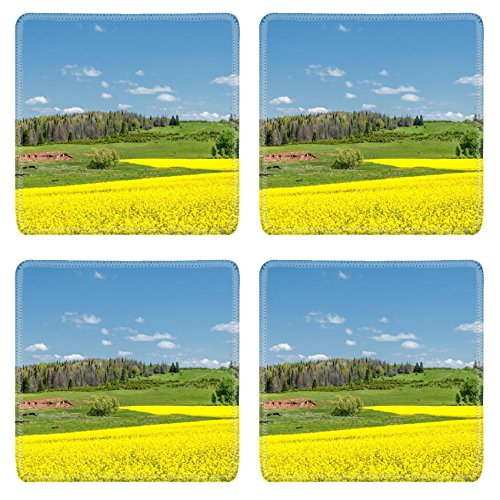Liili Natural Rubber Square Coasters Image ID 30774333 Fields and hills covered in bright yellow canola colza or rapeseed flowers Colorful blossom field