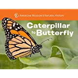 Caterpillar to Butterfly (Science for Toddlers)