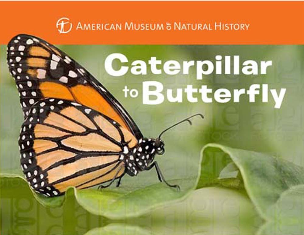 Caterpillar to Butterfly (Science for Toddlers) ebook