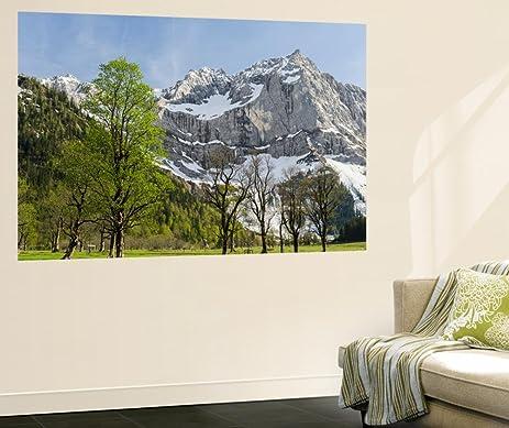 Sycamore Maple Trees, Spring, Eng Valley, Karwendel Mountain Range, Austria  Wall Mural