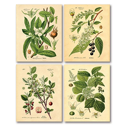Gango Home Decor Popular Old-Fashioned Plant Botanical Prints; Four 16x20in Fine Art Giclee Paper Prints