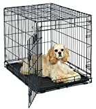 Medium Dog Crate | MidWest Life Stages 30' Folding Metal Dog Crate | Divider Panel, Floor Protecting Feet, Plastic Tray | 30L x 21W x 24H Inches, Medium Dog Breed