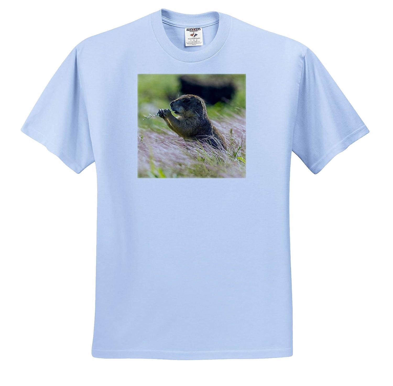3dRose Danita Delimont ts/_314962 Oklahoma USA Wichita Mountains NWR - Adult T-Shirt XL Mammal Prairie Dog Eating