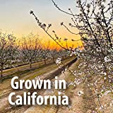 Nutriseeds Bitter Apricot Seeds | California Grown
