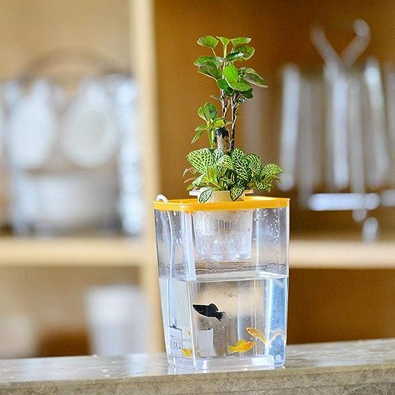 Leking El Acuario de acrílico ecológico, Acuario de jardín de Agua de Escritorio, simbiótico de Peces con Plantas: Amazon.es: Hogar