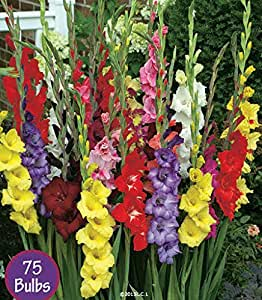 The Planting and Care of Gladioli