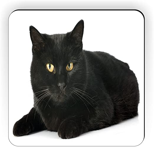 Rikki Caballero Regal Gato Negro con Ojos Amarillos en Fondo ...