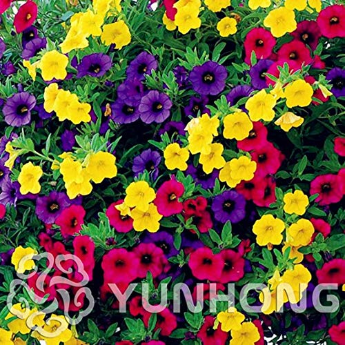 Annual Bell - Mini calibrchoa Million Bells Annual Flower Seeds Vary Colors 100pcs Autumn Seasons Indoor Balcony Easy to Plant Flower Seeds
