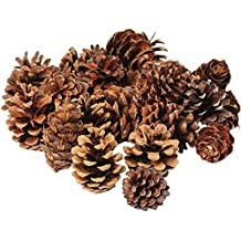 Constructive Playthings SCV-25 Small Pine Cone Classroom Variety Pack For Children