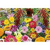graines semences BIO fleurs tubinger pour charmer les papillons abeilles pour 7 m2