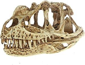 The Geeky Days Fossil Skull Model Collectibles High Precision Ceratosaurus Skull Model Rex Dinosaur Resin Model Figure Aquarium Ornament