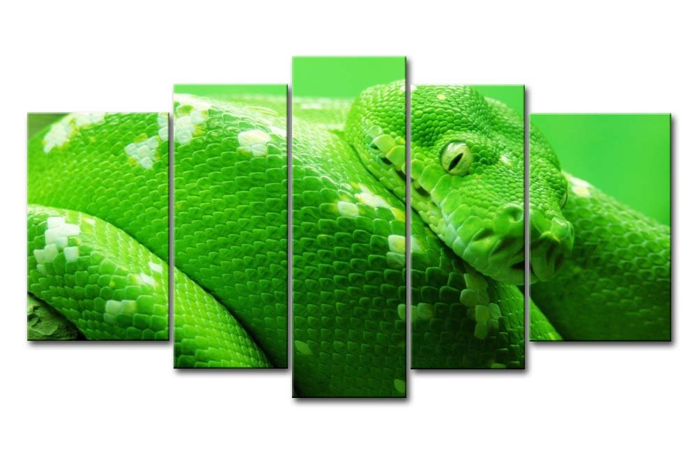 Cuadros de serpiente