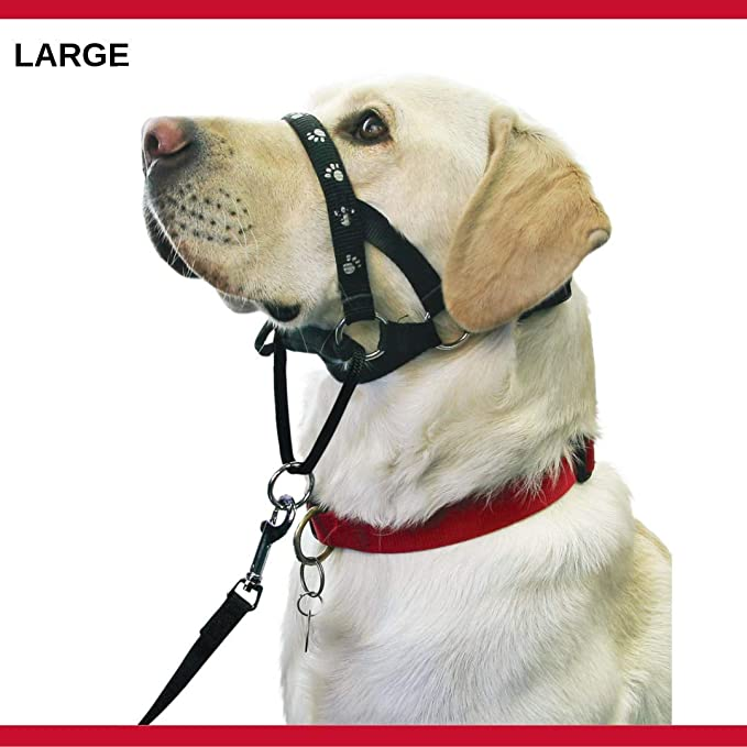 Mikki Arnés para Perros y Cachorros Collar de Paseo - Anti tirones ...