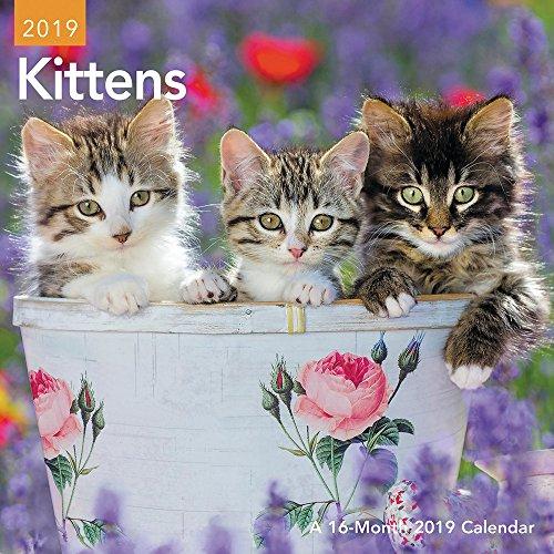 (Kittens Mini Wall Calendar)