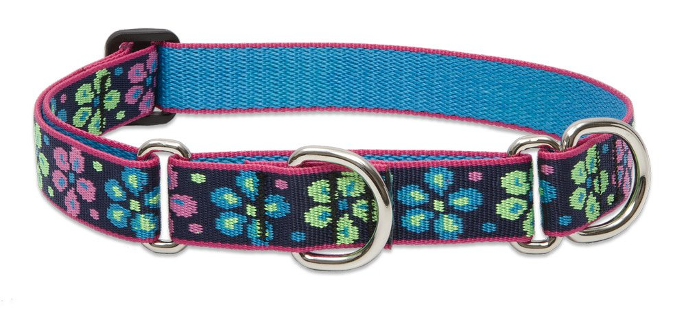 1\ Lupine 1-Inch Flower Power Martingale Combo Collar for Large Dogs, 15 to 22-Inch