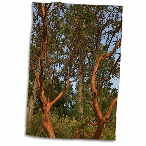 3dRose Danita Delimont - Forests - Canada, British Columbia, Russell Island. Arbutus tree. - 15x22 Hand Towel (twl_277234_1) - Russell Golf Towel