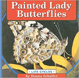 Painted Lady Butterflies Life Cycles Donna Schaffer