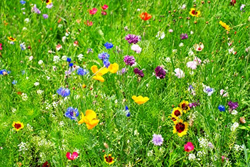 Wildflower Seeds Partial Shade Mix - 1/2 Ounce Over 3,500 Open Pollinated Annual and Perennial Seeds (1)
