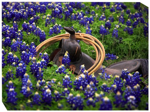 West of the Wind All-Weather Art Print, 30 by 40-Inch, Bluebonnet Saddle