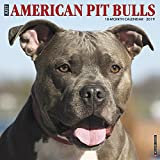 Just American Pit Bull Terriers 2019 Wall Calendar (Dog Breed Calendar)