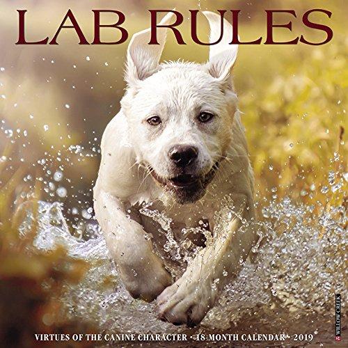 (Lab Rules 2019 Wall Calendar (Dog Breed Calendar))