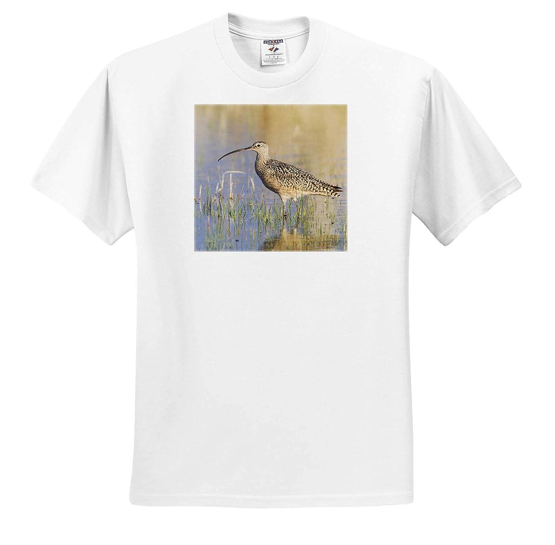 Birds 3dRose Danita Delimont Adult T-Shirt XL ts/_313973 Long-Billed Curlew
