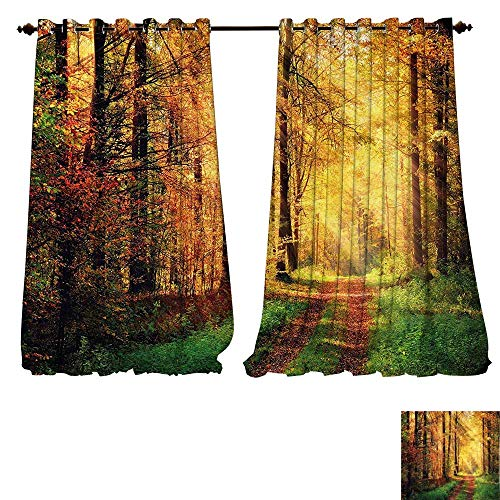 Bright Curtain Panels Modern Decor Autumn Forest Scenery with Rays of Warm Sun Lights on Shady Trees Woods Art Yellow Green Closet Curtain for Bedroom W84 x L84/Pair -