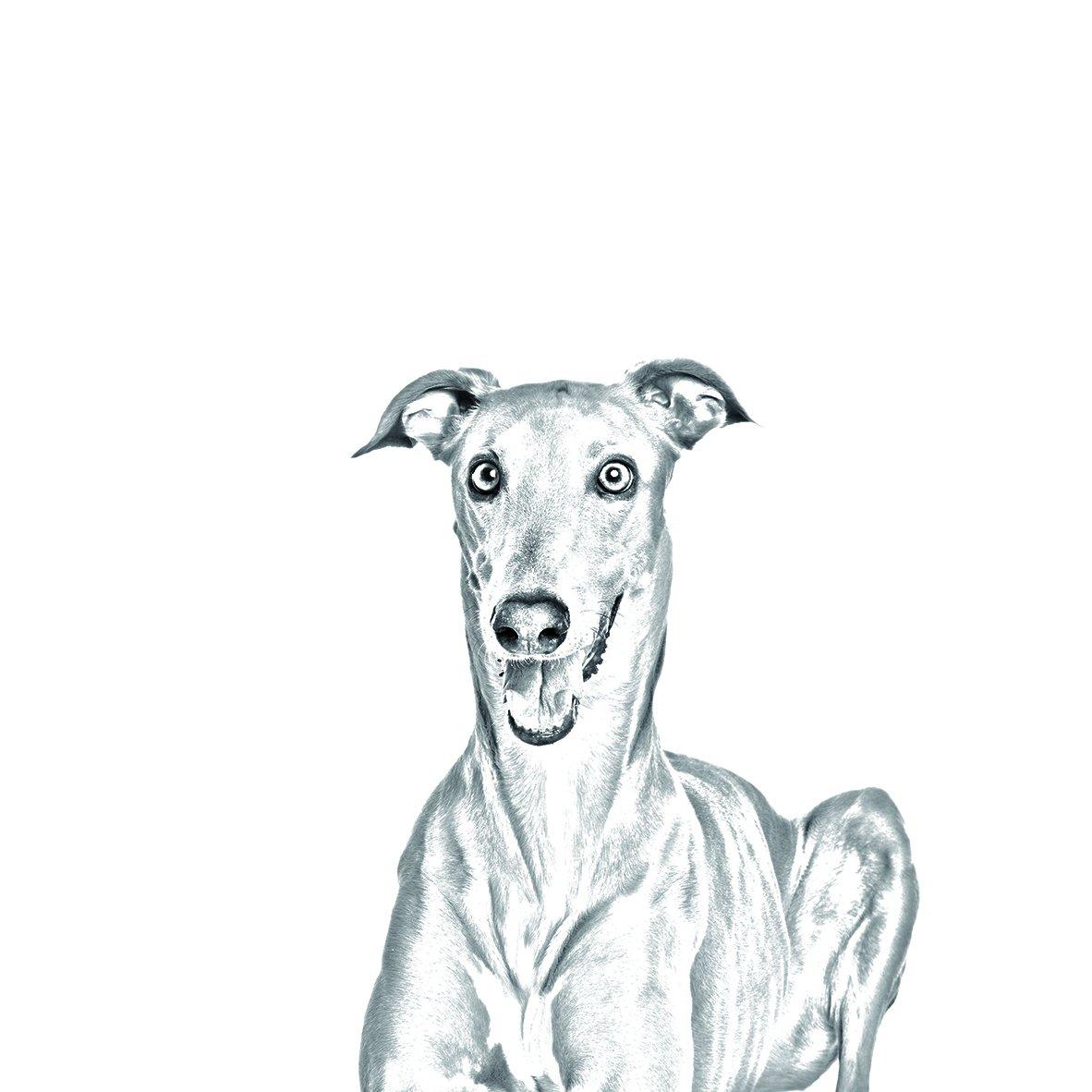 ArtDog Ltd. Galgo Italiano, nuevos llaveros con Perros de ...