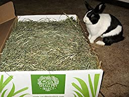 Small Pet Select 2nd Cutting Timothy Hay Pet Food, 8-Pound