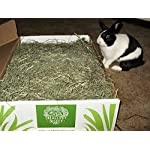 """Small Pet Select 2nd Cutting """"Perfect Blend"""" Timothy Hay Pet Food 19"""