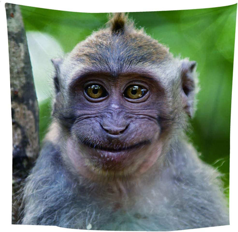 Mrqxdp Big Eyed Monkey Photo Tapestry Bedroom Living Room Wall Decoration Shawl Beach Towel For Multiple Purposes Amazon Co Uk Kitchen Home