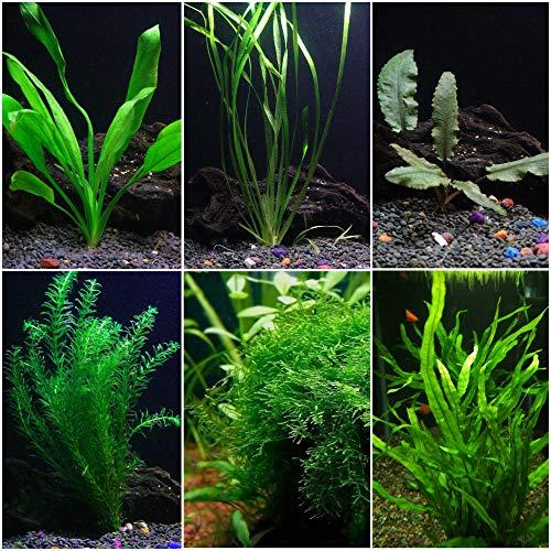 AquaLeaf Aquatics Low Light Plant Bundle - 6 Plant Species