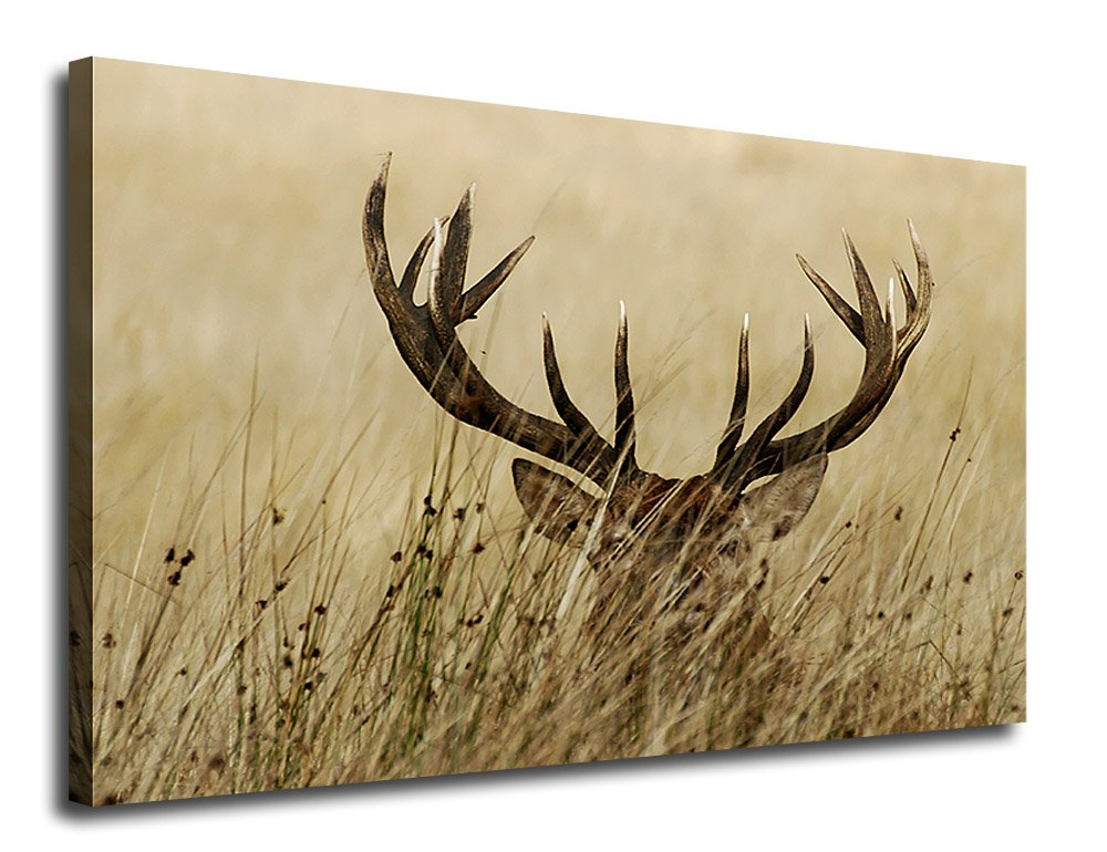 Canvas Wall Art Deer Antler in Grass 24'' x 36'' Large Canvas Picture Deer Contemporary Wall Decor Elk Deer Autumn Season Painting Modern Brown Canvas Artwork for Home Decoration Framed Ready to Hang by arteWOODS