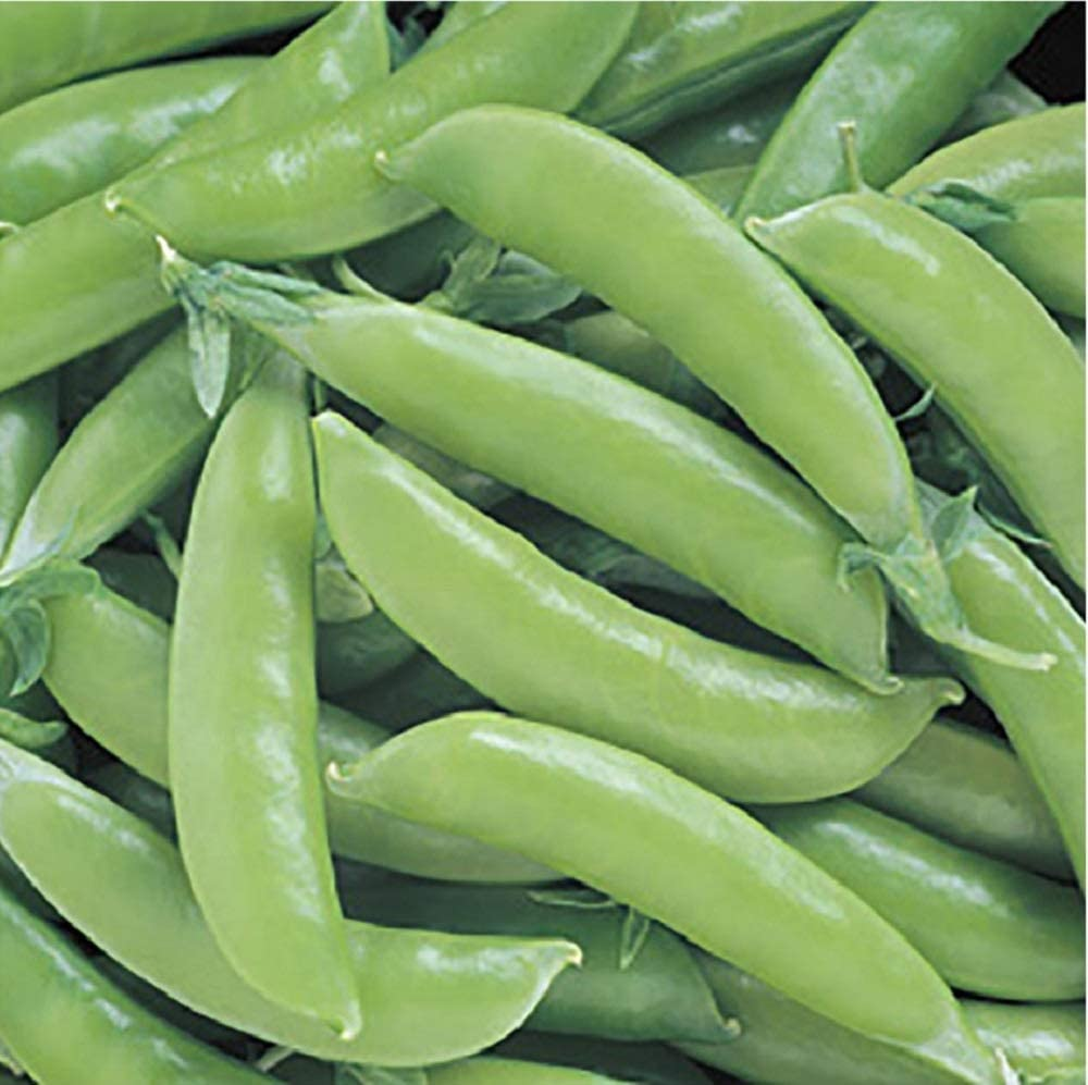 David's Garden Seeds Pea Super Sugar Snap 4736 (Green) 100 Non-GMO, Open Pollinated Seeds