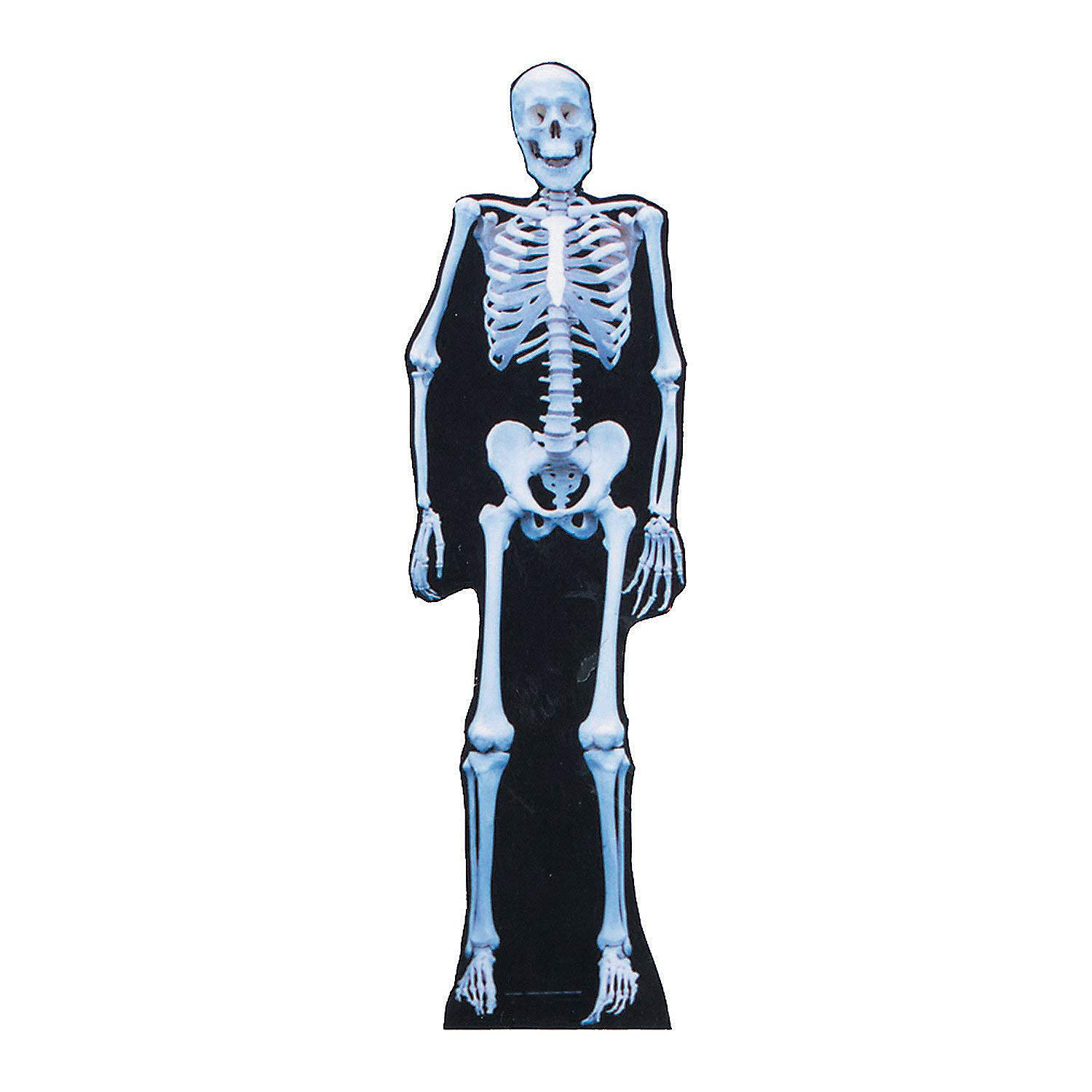 Amazon com: Fun Express - Skeleton Stand up - Party Supplies