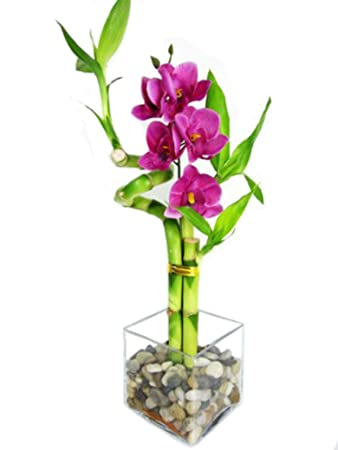 259 & 9GreenBox - Lucky Bamboo - Spiral Style with Silk Flowers and Glass Vase with Pebbles