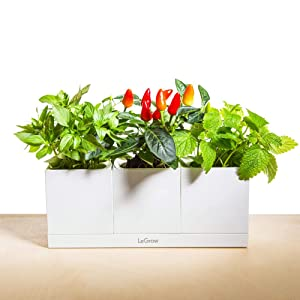 LeGrow Self Watering Herb Garden Planter Plant Pots Office Green Smart Office Planters Hydroponic Home Modular Design 3 Pots Plus Base (3-Pot TG-C) - Plants Not Included