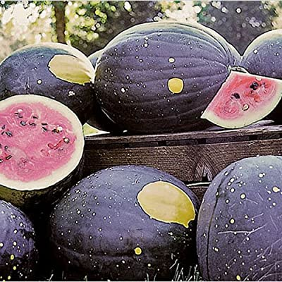 "Package of 20 Seeds, Watermelon ""Van Doren Moon & Stars"" (Citrullus lanatus) Non-GMO Seeds By Seed Needs"