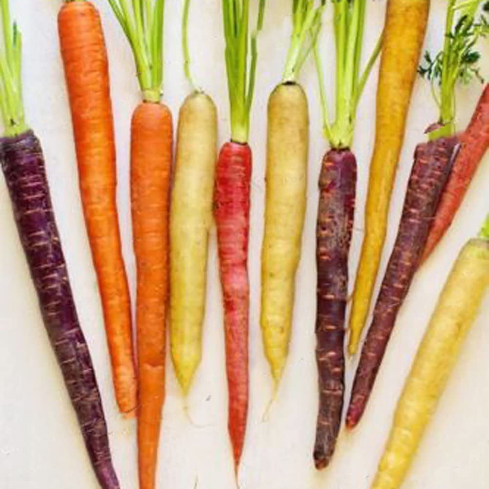 ZHOUBA casa fattoria 200 pezzi di semi di carota arcobaleno di buon gusto e facile da coltivare verdure Semi di carota per piante da giardino in cortile
