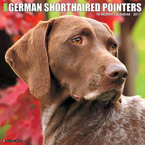 Just German Shorthaired Pointers 2017 Wall Calendar  Dog Breed Calendars