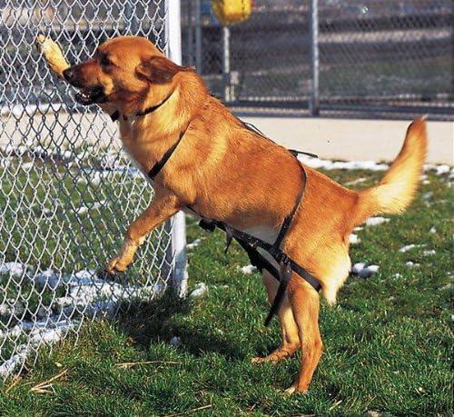 Jump retención arnés para perros, evita saltando: Amazon.es: Jardín