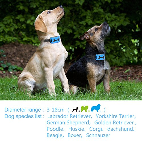 Colpet Dog Training Collar Review