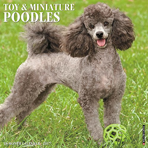 Just Toy   Miniature Poodles 2017 Wall Calendar  Dog Breed Calendars