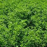 Outsidepride Alfalfa Seed - 10 LBS