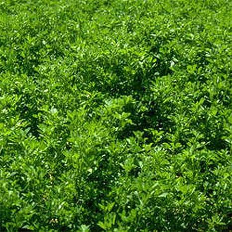 Outsidepride Alfalfa Legume Seed 1 LB