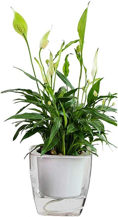 PPING Macetas Riego Automatico Macetas Plastico Macetas Semillas de ollas Jardín de macetas Macetas para Plantas Macetas de Flores La Planta de Interior l