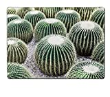 Liili Placemat Natural Rubber Material Image ID 22091994 Echinocactus grusonii popularly known as the Golden Cactus