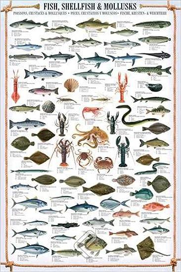 empire interactive poster soggetto pesci molluschi e crostacei multicolore