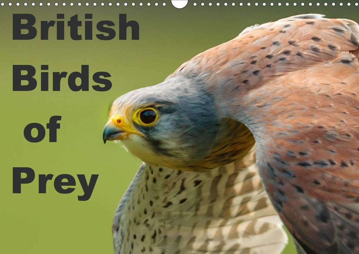 Amazon Com British Birds Of Prey Wall Calendar 2021 Din A3 Landscape Office Products